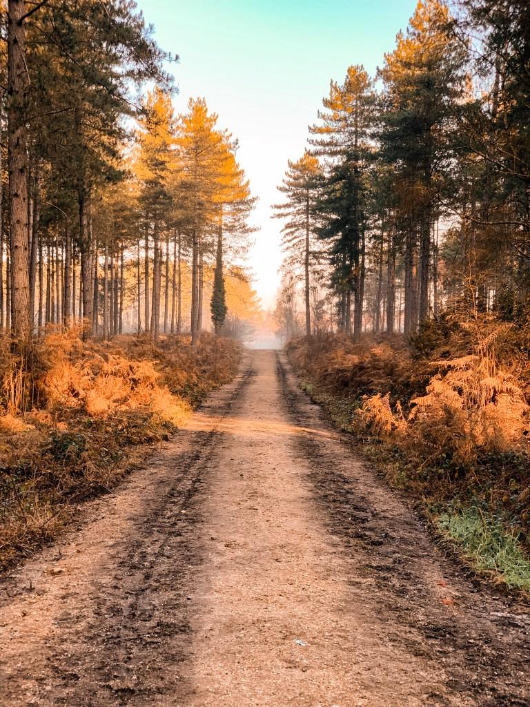jaye rockett 2020 goals word of the year ringwood forest sunrise