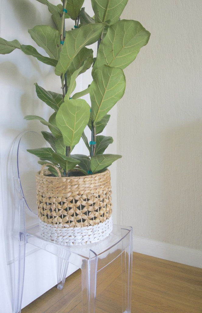 Indoor Plant Basket