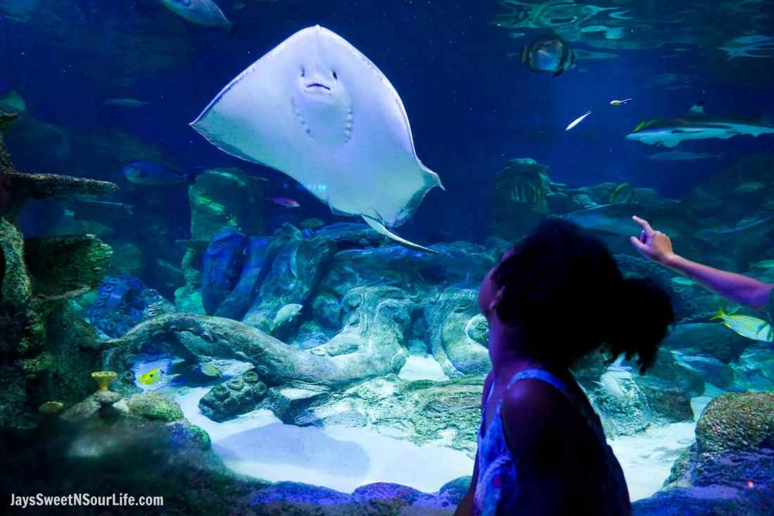Sea Life - Visit Cabarrus County - Tank Sting Ray Little Girl. A Large Families Adventure Guide To Cabarrus County - North Carolina - via JaysSweetNSourLife.com.