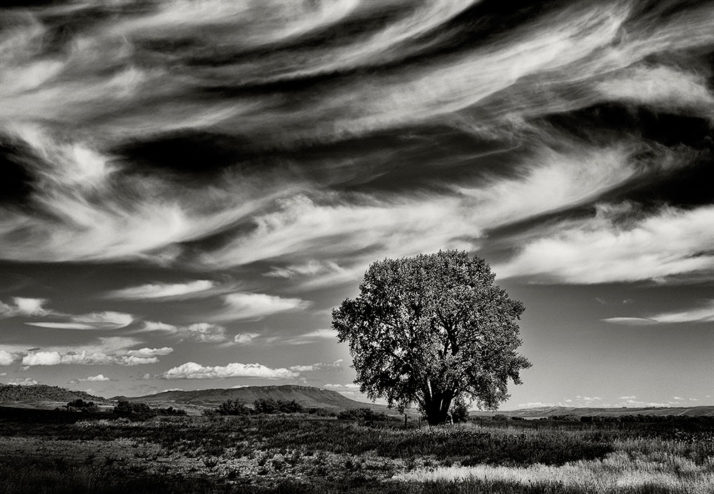 Farmland-Single-Tree-Black-and-White-Photograph