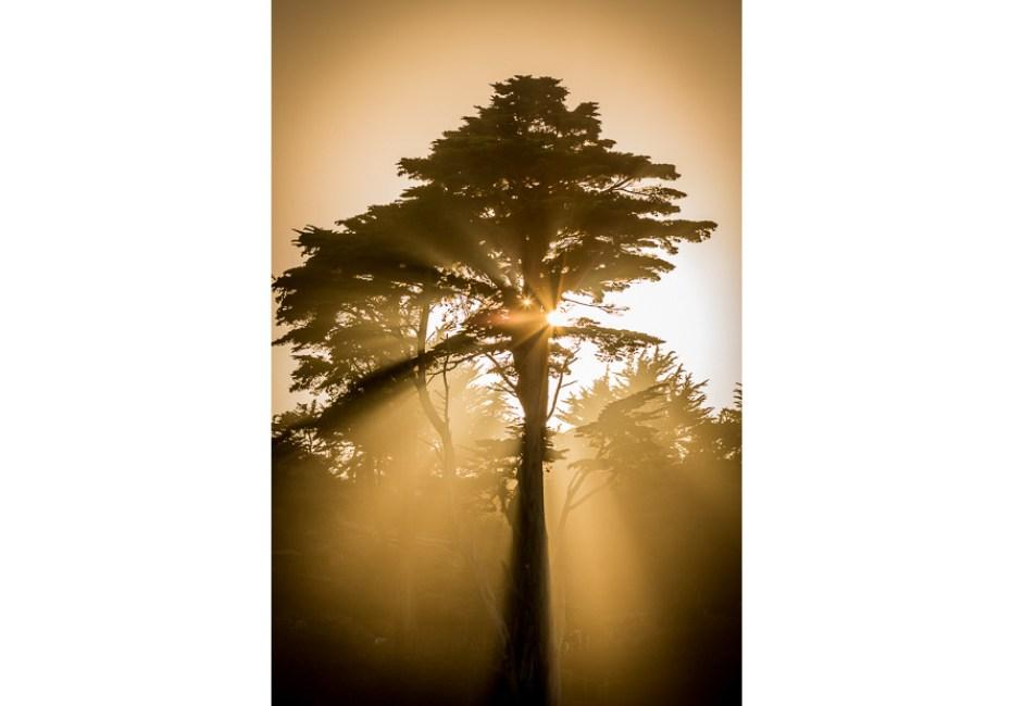Sunbeams Through the Pine by Joe Azure.