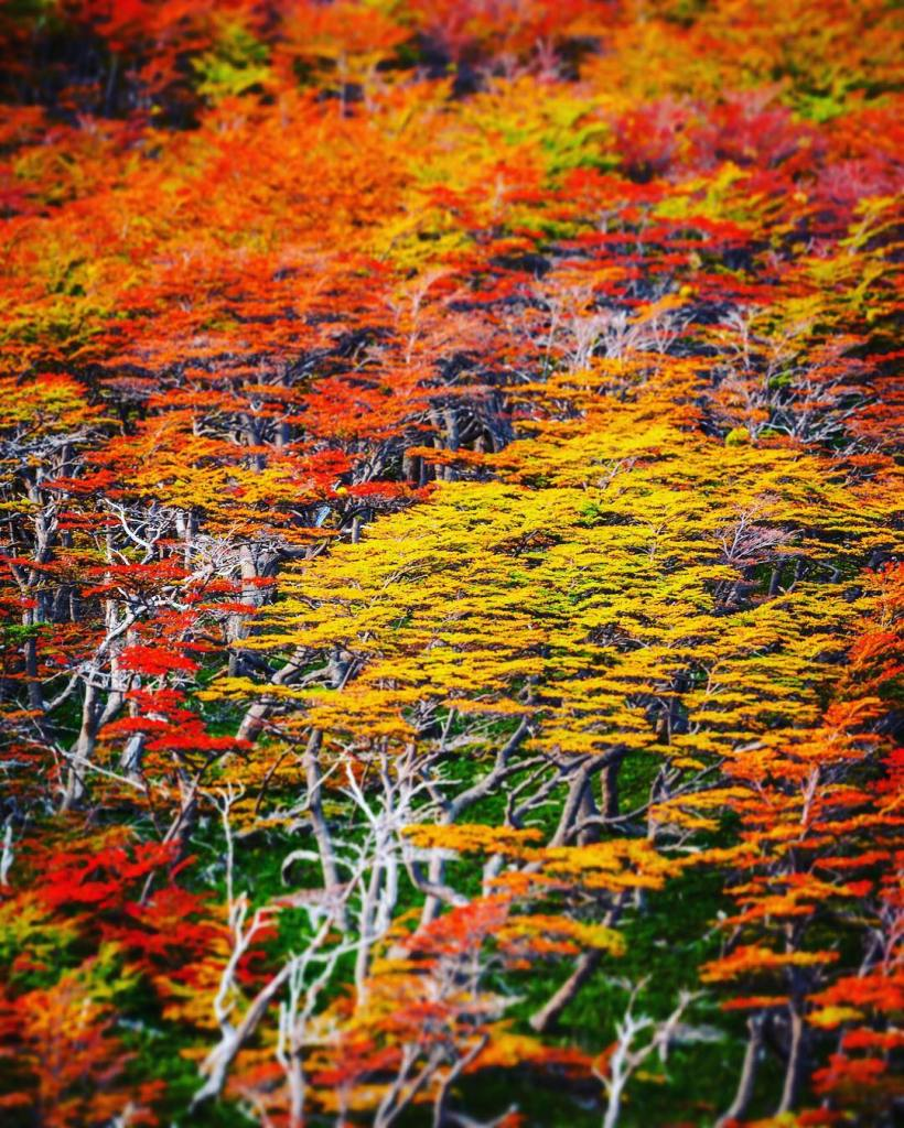 Abstract Autumn  Fall colors in Patagonia  The hikehellip