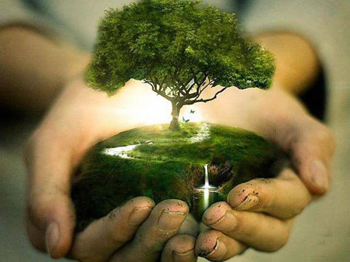 Il Blog: Un alberello da piantare?