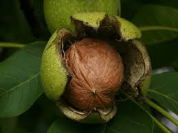 Il Blog: Darà frutti? Di che tipo?