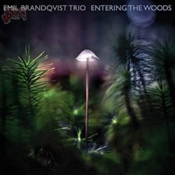 Entering The Woods - Emil Brandqvist Trio