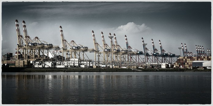colony of cranes II