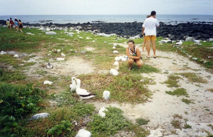 Brasil - Bahia - Arquipelago de Abrolhos - Ilha Siriba - Ninhal dos Atobas
