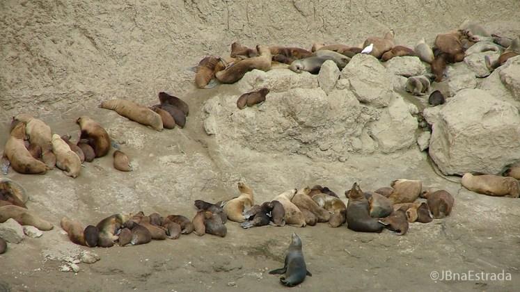Argentina - Puerto Madryn - Peninsula Valdes