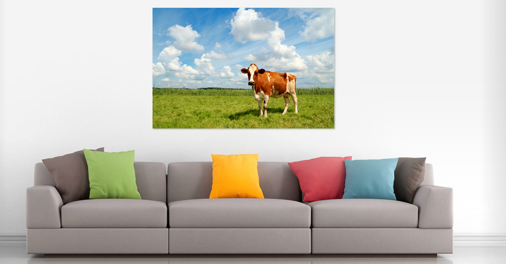Curious cow - Interiordesign