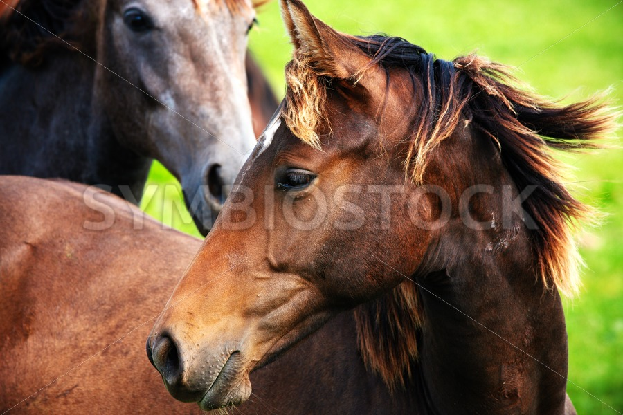 Close-up of horses - Jan Brons Stock Images