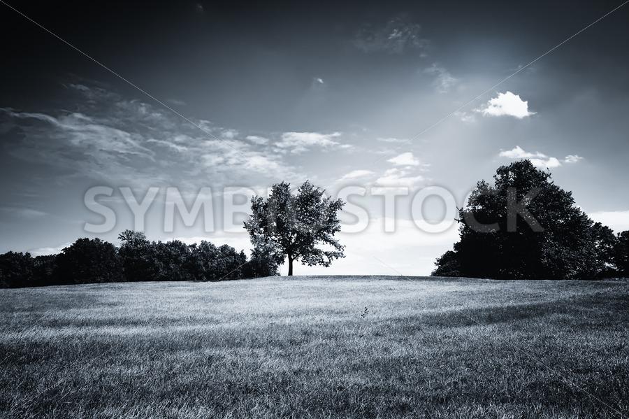 Hilly Black White Landscape - Jan Brons Stock Images