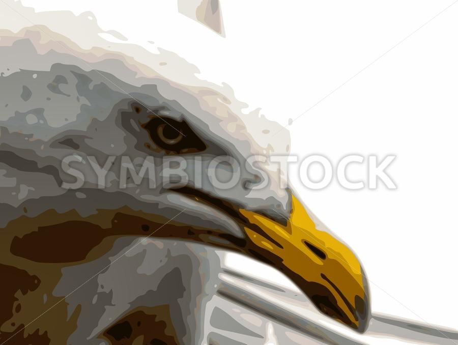 Seagull closeup - Jan Brons Stock Images