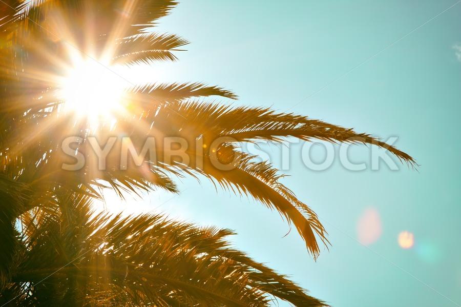 Tropical Sun Palm Tree