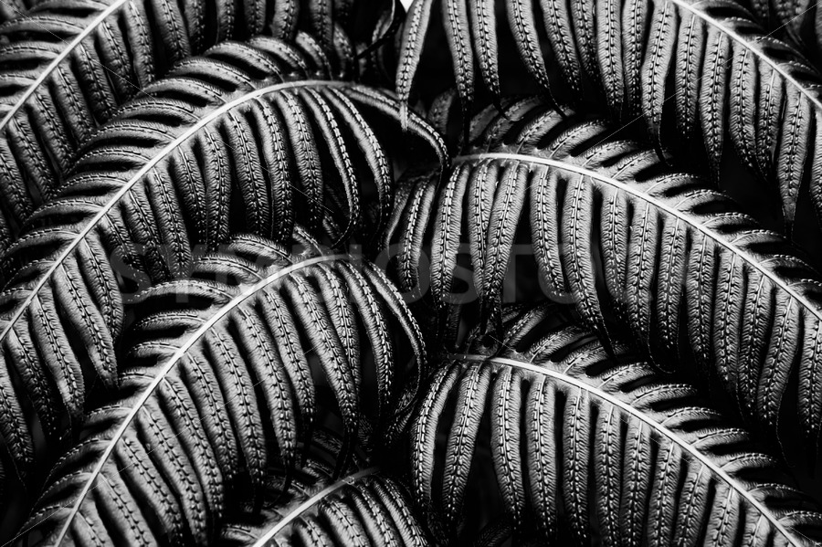 Tropical fern Black White - Jan Brons Stock Images