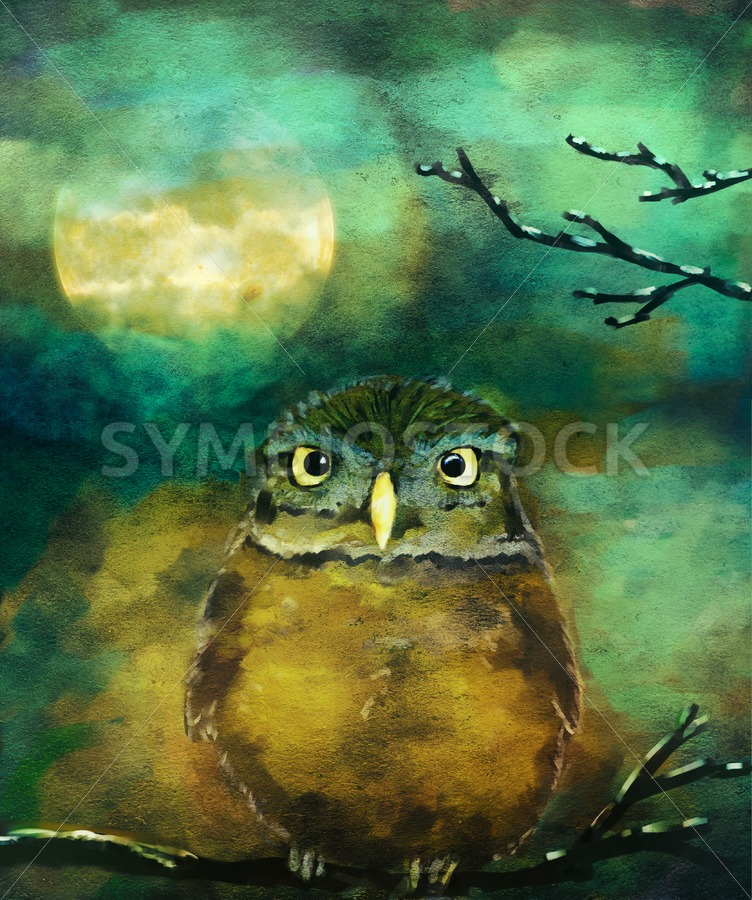 Night owl - Jan Brons Stock Images