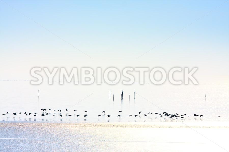 Winter geese frozen ice - Jan Brons Stock Images