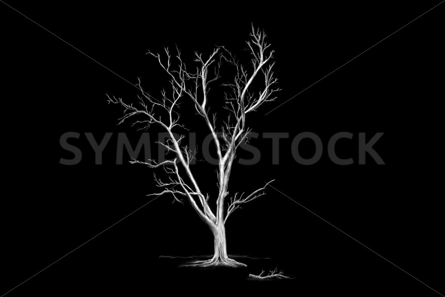 Big Old Leafless Tree - Jan Brons Stock Images