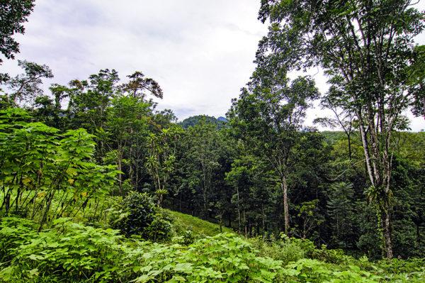 Chachagua, Costa Rica