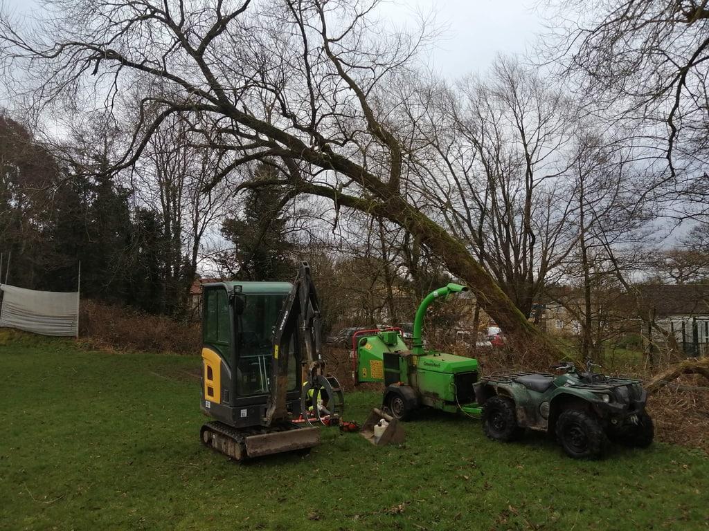 Fallen Tree To Safely Fell JC Arborists