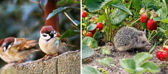 Réunion Projet Biodiversité
