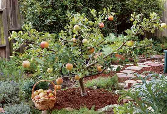 Falling Leaves Wallpaper Blackberry Small Fruit Trees For Small Gardens