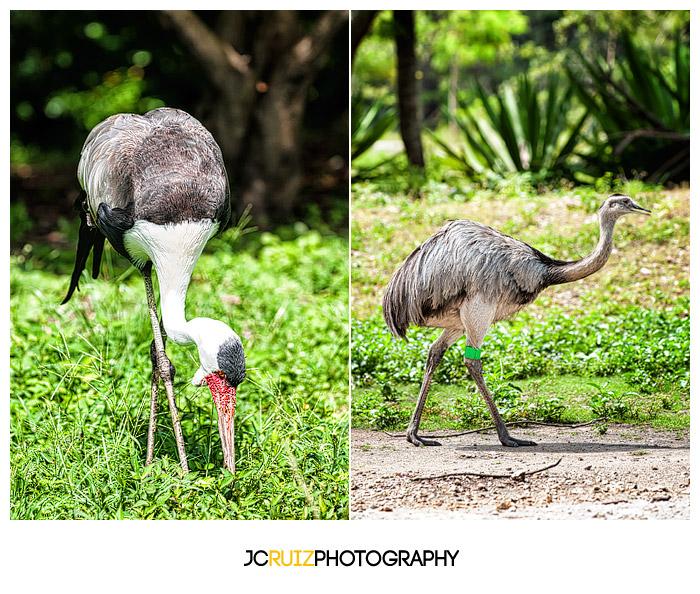 Zoo Miami Birds
