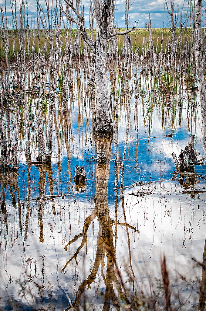 Reflections in the Everglades