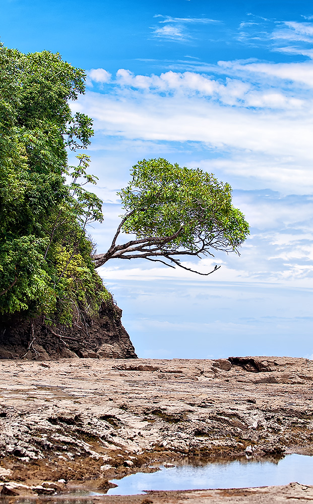 Isolated tree on a Costa Rican beach