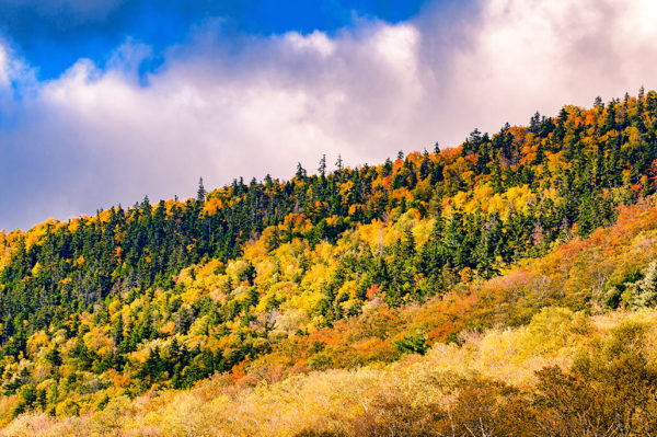 Fall in the White Mountains
