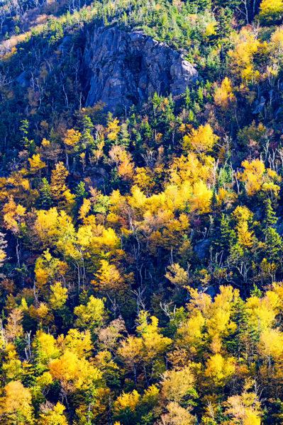 white mountains foliage