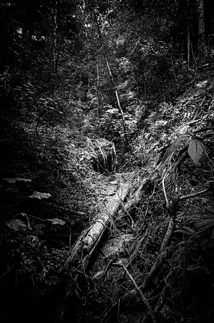 Fallen tree in the jungle