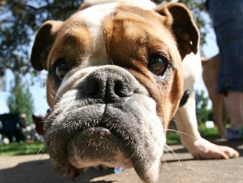 Belgique: Faire garder son animal de compagnie