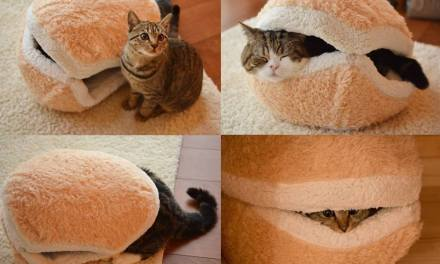 Comment combler un chat?