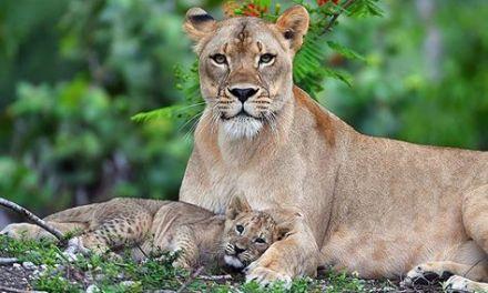 La fierté d'une mère.