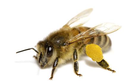 Fortes chaleurs : Construire un abreuvoir pour les abeilles!