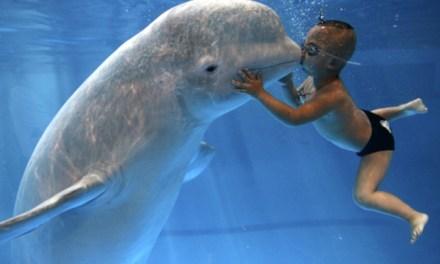 L'histoire de NOC, cette baleine blanche capable d'imiter la voix humaine