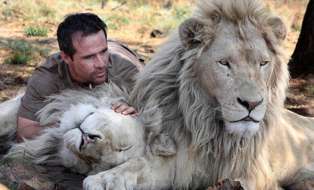 Kevin et les lions