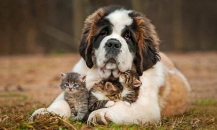 Un chien, un chat; c'est un coeur avec du poil autour. (Brigitte Bardot)