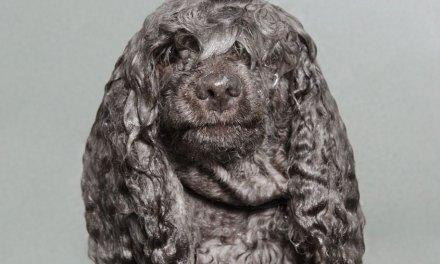 Sophie Gamand présente ses chiens mouillés!