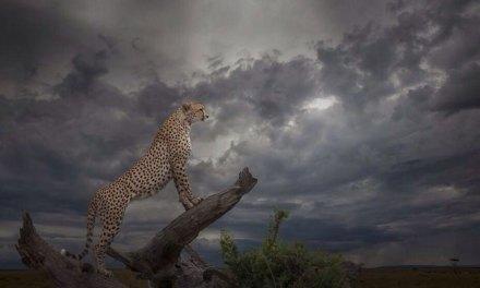Découvrez les splendides photographies récompensées lors de la B&H Wilderness Competition 2014