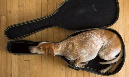 30 chiens qui s'assoient n'importe où, dans le déni le plus total