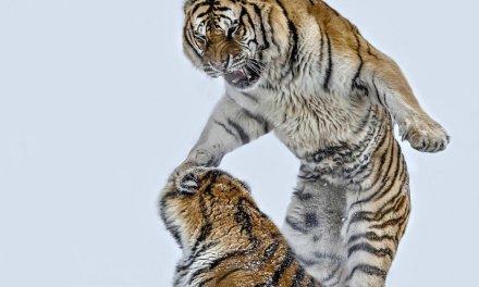 Ces 50 photos puissantes capturent le monde animal comme vous ne l'avez jamais vu