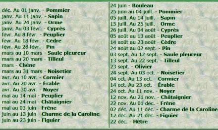 Quel Arbre êtes-vous en Astrologie Celtique ?