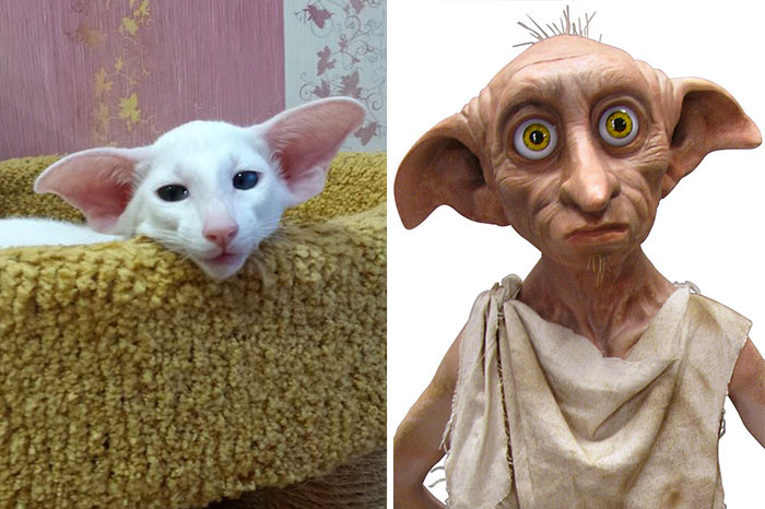 30 chats qui vont vous faire éclater de rire par leur ressemblance inattendue avec des personnages connus