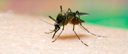 Le paludisme régresse fortement, se réjouissent l'OMS et l'Unicef.