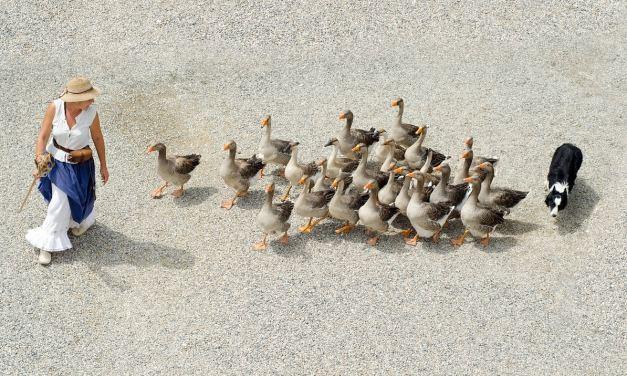 Peut-être avez-vous l'intention d'acheter ou de manger du foie gras pour les fêtes de fin d'année ? Ecoutez le message de Matthieu Ricard – Vidéo L214