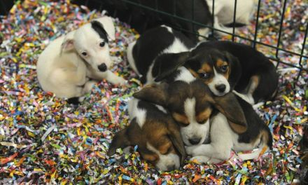 Belgique: Le parlement wallon approuve l'interdiction de la vente d'animaux dans les lieux publics