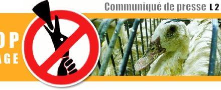France: Une députée dépose une proposition de loi pour interdire le gavage