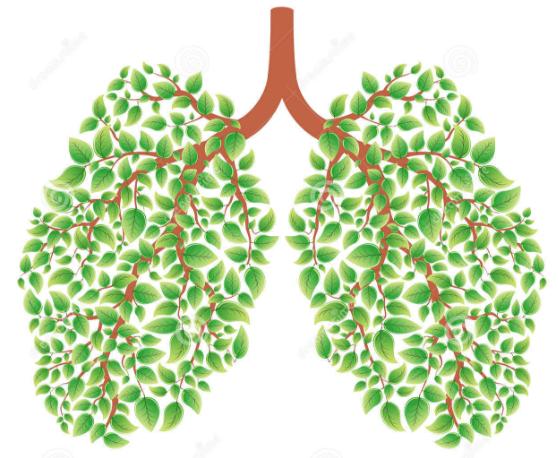 Sirop maison pour libérer les poumons des mucosités ...