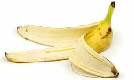 15 choses utiles à faire avec une peau de banane